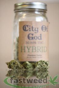 City Of God By Phantom Farms