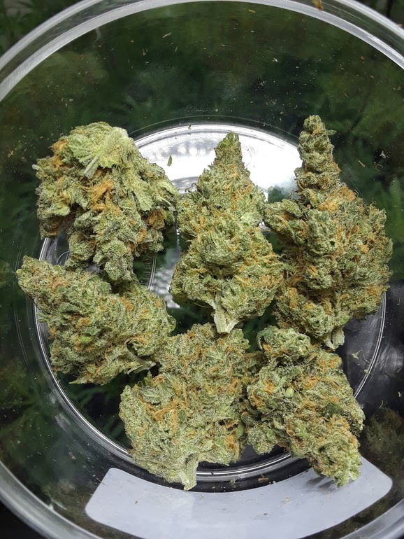 Looking for Blue Dream near 404 Thanksgiving St, Uniontown, PA 15401, USA